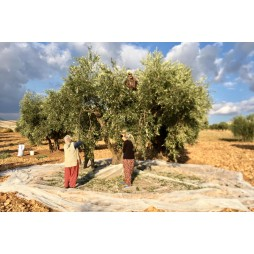 Early Harvest Extra Virgin Olive Oil 2000 ml.