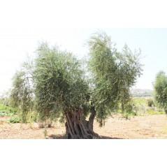 Lohan Virgin Olive Oil 3000 ml.